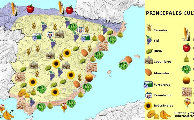 Rendimiento por hectárea de los cultivos en España