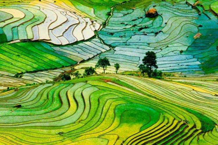 Cambiar el mapa global de los cultivos podría alimentar a 825 millones de personas más