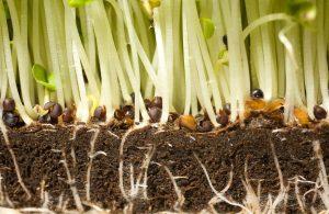 Mecanismos básicos de crecimiento y reparación celular de las raíces