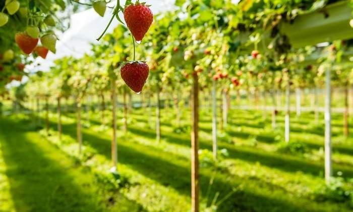 Holanda revoluciona la agricultura: exporta más alimentos que España y Francia juntas con métodos sostenibles