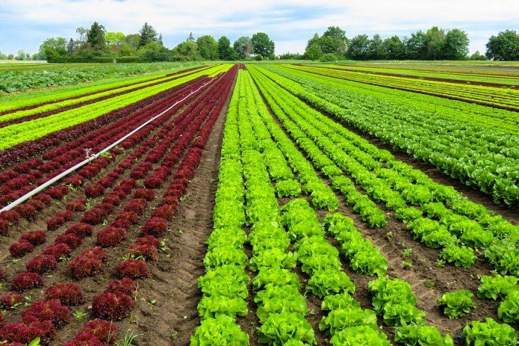 ¿Quieres saber que Límite máximo de residuo debe de cumplir tu cultivo?